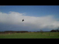 EHGR apaches struggling with heavy crosswinds at Gilze Rijen